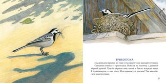 Птицы за окном